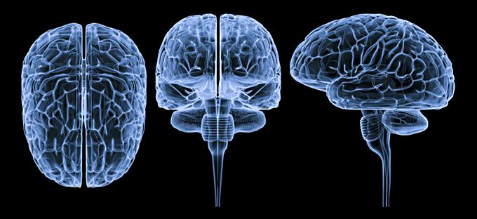 Neuroespacio sistemaNervPerif El sistema nervioso Todas ¿Qué son la Neurociencias?
