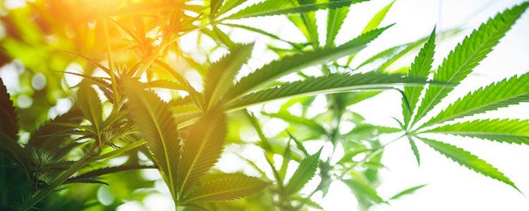 Neuroespacio marihuana-y-sociedad-01-750x300 Marihuana y sociedad Neurociencias todos los días